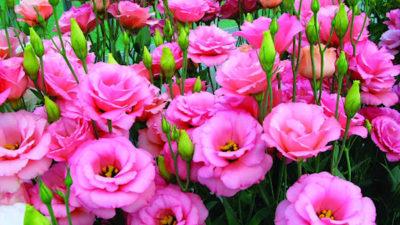 Những bông hoa vẫn nở trái mùa
